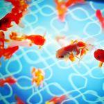 都内の夏デートなら水族館へ、金魚に会えるロマンチックな92日間。のサムネイル画像
