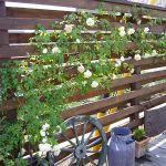 木製フェンスであなたのお庭をもっとおしゃれにしませんか?のサムネイル画像
