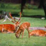 奈良県民が厳選したお薦め過ぎる公園デートスポット6選in奈良!のサムネイル画像