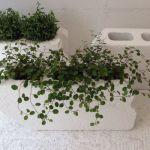 虫除けになる植物があるのは知ってますか?薬品不要で快適に過ごそうのサムネイル画像