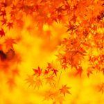 【東京】秋は紅葉。休日に思いきり癒される都心の紅葉スポット5選のサムネイル画像