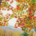 【関東】日帰りもOK。10月~11月のおすすめ紅葉ランキング2016のサムネイル画像