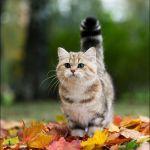 【都内】猫好きなら行くしかニャい!2016年秋の猫イベント3選のサムネイル画像