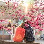 招き猫が恋を招く! 浅草・今戸神社は、縁結びのパワースポットのサムネイル画像