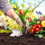 目指せ☆ガーデニングのプロ!誰にでも出来ちゃう簡単なお花の育て方のサムネイル画像