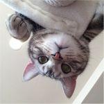 【ネコ好き必見!】愛猫が楽しく遊べるキャットタワーの自作方法のサムネイル画像