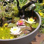 初心者歓迎!【ビオトープの作り方】水辺の景色に癒されようのサムネイル画像