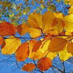 美しい紅葉にしみじみ浸る。12月でも間に合うおすすめスポット7選のサムネイル画像