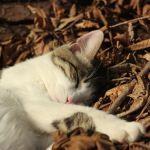 可愛いわんちゃんや猫ちゃんのために、こんなベッドはいかが‼のサムネイル画像