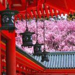 【桜トンネルに夜桜…見とれる美しさ♡】春の旅行は《京都》へ桜の絶景を見に行こう!のサムネイル画像