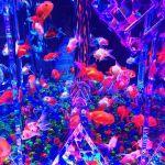 真夏の涼しいテーマパーク♡東京の【アートアクアリウム】とは?のサムネイル画像