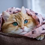 【今日はネコの日】飼えない人もにゃんこにまみれて♡癒し&おもしろネコ特集のサムネイル画像