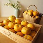 旬の果物をおいしく食べよう!《甘夏》をつかったおすすめレシピのサムネイル画像