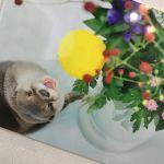 大人気!プニプニおててが可愛すぎる♡《コツメカワウソ》特集!のサムネイル画像