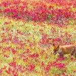 女子旅・カレとのデートも秋の休日は『紅葉スポット』にいきたい♡のサムネイル画像
