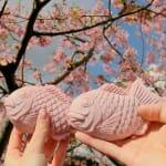 今年は一味違う桜を楽しもう!フォトジェな【2大桜まつり】@伊豆♡のサムネイル画像