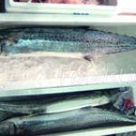 さわらってどんな魚?さわらを使った簡単でおいしいレシピまとめのサムネイル画像