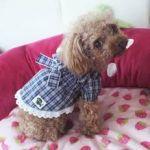 犬の洋服だからってあなどれない!!今のペットの洋服事情~!のサムネイル画像