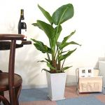 お部屋をオシャレに★東京で観葉植物が買えるお店をご紹介しますのサムネイル画像