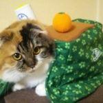 猫好き必見!猫はこたつで丸くなる♪こたつのお供は猫とみかんで決定のサムネイル画像
