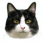猫好きにはたまらない!猫ちゃん用の猫グッツと猫モチーフの雑貨のサムネイル画像