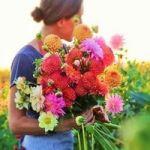 え?この花ってそんな花言葉だったの?人気の花言葉ランキングのサムネイル画像