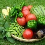 野菜を育てて園芸を楽しみましょう☆秋から始めるのがおススメです!のサムネイル画像