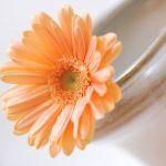 ボリュームがあってカラフル♡キュートなガーベラのお花束たち!のサムネイル画像