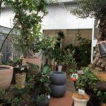 池袋の街にできた空中庭園がすごい!観葉植物好きにおすすめ!のサムネイル画像