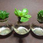 【インテリアに】多肉植物を水栽培で育ててみよう!【最適】のサムネイル画像