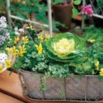 寄せ植えを緑一色でしたらナチュラル可愛いインテリアになった!?のサムネイル画像