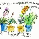 エアープランツは、水を空気中から吸収して生長する植物です。のサムネイル画像