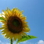 綺麗な花を咲かせましょう!それぞれの季節に植える花をご紹介☆のサムネイル画像