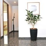 【グリーンのある暮らし】観葉植物で玄関のイメージを明るく変えようのサムネイル画像