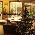 ニトリ・クリスマスツリー品数豊富!ニトリ・クリスマスツリーいかがのサムネイル画像
