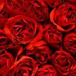 天然香料を使用したものを中心にしたローズの香りの香水の口コミ集!のサムネイル画像