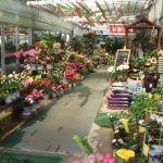 【関西】おしゃれな植物が買える大阪の園芸店をご紹介します★のサムネイル画像