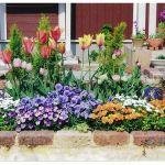 """春に""""おすすめ""""なガーデニングの花をご紹介しちゃいます♡のサムネイル画像"""