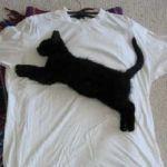 猫はお好きですか?猫Tシャツで猫好きアピールはじめませんか?のサムネイル画像
