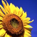 夏のお花♡アレンジメントのコツも押さえて夏のお花を楽しもう!のサムネイル画像