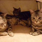 こたつ猫の癒され画像を眺めて今日も1日お疲れさまでした!のサムネイル画像