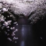 【花見デートといえば・・・】全国のお花見デートのスポット調査♪のサムネイル画像