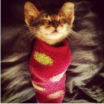 猫好きさんにご紹介‼絶対欲しくなる☆猫ちゃんモチーフの靴下♡のサムネイル画像