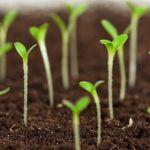 野菜を種から育ててみませんか?簡単にできる育て方を紹介しますのサムネイル画像
