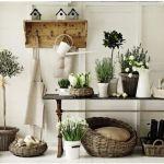 さあ、あなたも初めてみませんか~部屋に観葉植物置いてみよう~のサムネイル画像