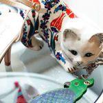 猫好き必見!思わず買っちゃうポール&ジョーの猫アイテム♡のサムネイル画像