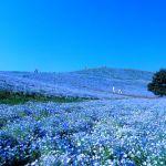 知らないと損!茨城県のおすすめデートスポットをご紹介!!のサムネイル画像