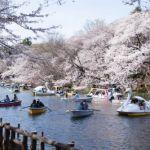 都会的で自然がいっぱい!吉祥寺のデートコースをご紹介します!のサムネイル画像