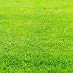 いつかはあこがれの広い芝生の庭に!さまざまな種類とお手入れ方法のサムネイル画像