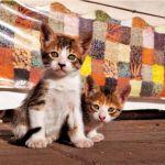 【猫好き必見】岩合光昭さんの撮った世界の可愛すぎる猫たち。のサムネイル画像